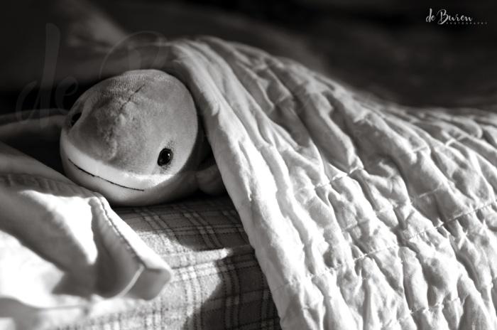 Jean_H_de_Buren_shark_1764-BW