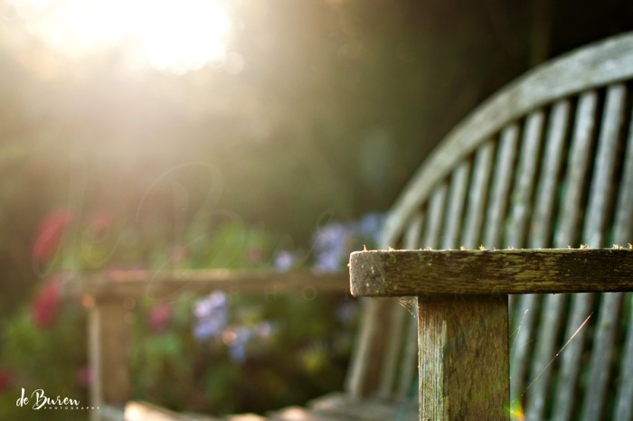 Jean_H_de_Buren_morning_bench-7073-a