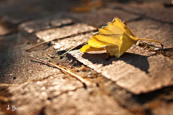 Jean_H_de_Buren_yellow_leaf_2654